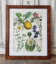 1800s 